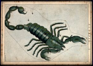 Etching of the constellation Scorpio. Courtesy of the Wellcome Library, London, UK